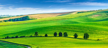 Rolling landscape of South Moravia with trees Stock Image