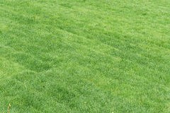 Rolling lawn Royalty Free Stock Photography