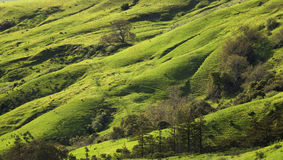 Rolling Pastoral Hills Stock Photo