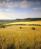 Rolling platteland royalty-vrije stock afbeelding