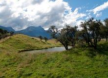 Rolling platteland in Nieuw Zeeland stock afbeeldingen