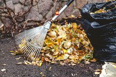 Rolling rakes collect fallen leaves in big pile Royalty Free Stock Images