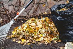 Rolling rakes collect fallen leaves in big pile Royalty Free Stock Image