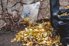 Rolling rakes collect fallen leaves in big pile Stock Photography