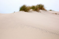 Rolling sand dune Royalty Free Stock Photo
