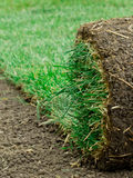 Rolling Sod. A roll of sod being put down Royalty Free Stock Photo