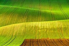 Rolling spring fields. Arable lands in Czech Moravia. Green spring hills. Rolling spring fields. Arable lands in Czech Moravia Stock Photography