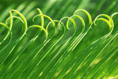 The rolling spring leaves Royalty Free Stock Images