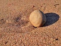 Rolling strandsteen die van zonlicht genieten Stock Afbeeldingen