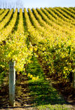 Rolling Vines Royalty Free Stock Image