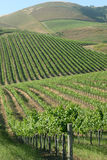 Rolling vineyard royalty free stock photos
