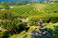 Rolling vineyards in California royalty free stock images