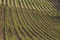 Rolling vineyards of a wine farm in South Africa stock photo