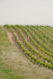 Rolling vineyards Royalty Free Stock Photography