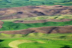 Rolling wheat field Stock Image