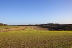Rolling wheat fields Stock Photo