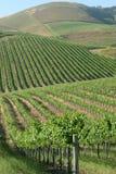 Rolling wijngaard Royalty-vrije Stock Foto's