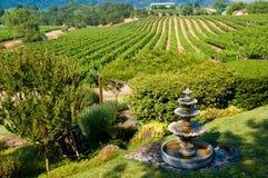 Rolling wijngaarden in Californië Royalty-vrije Stock Afbeeldingen
