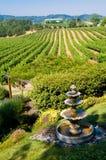 Rolling wijngaarden in Californië stock afbeelding