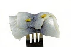 Rollmops выкружки сельдей Bismark Стоковое Фото