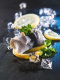 Rollmop herring on lemon slices and ice cubes Stock Image