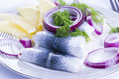 Rollmops on a plate Royalty Free Stock Image