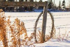 Rollo del alambre de púas que se inclina en posts de la cerca Fotografía de archivo libre de regalías