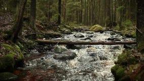 Rollo en un río rápido del bosque almacen de metraje de vídeo
