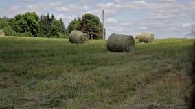 rollos del heno en campo de hierba en paisaje rural Agricultura, tierras de cultivo, brillo del sol, bala de heno almacen de video