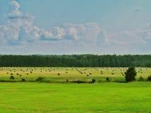 Rollos del pasto del paisaje del heno foto de archivo libre de regalías