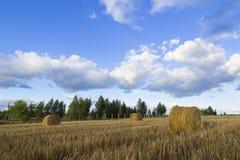 Rolls сена в поле Стоковая Фотография RF