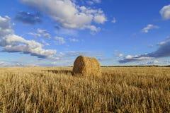 Rolls сена в поле Стоковое Изображение RF