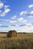 Rolls сена в поле Стоковое Изображение