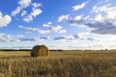 Rolls сена в поле Стоковые Фотографии RF