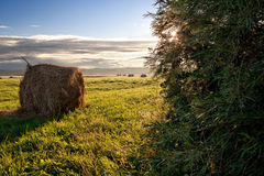 Rolls сена Стоковая Фотография