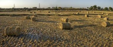 Rolls травы Стоковые Фото
