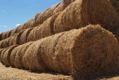 The rolls. Rolls of dry cereals arranged for transport Royalty Free Stock Photography