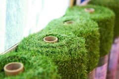 Rolls of artificial grass cover. In store Royalty Free Stock Photos