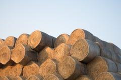 Rolls dei mucchi di fieno sul campo Paesaggio dell'azienda agricola di estate con il mucchio di fieno sul Backgr Fotografia Stock