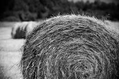 Rolls dei mucchi di fieno sul campo Paesaggio dell'azienda agricola di estate con il mucchio di fieno Immagine Stock
