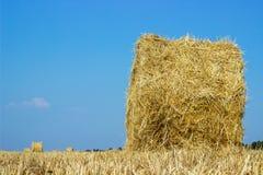 Rolls dei mucchi di fieno sul campo Paesaggio dell'azienda agricola di estate con il mucchio di fieno sui precedenti di bello tra Immagini Stock