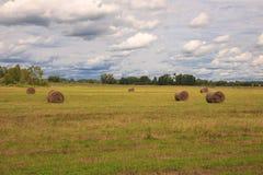 Rolls del heno en un campo Imagen de archivo