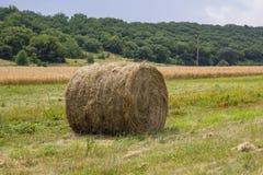 Rolls del mucchio di fieno sul campo, dopo la raccolta del grano Fotografia Stock Libera da Diritti