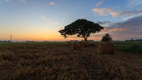 Rolls della paglia della risaia con il fondo dorato di tramonto a Sungai Besar, Selangor, Malesia Immagine Stock