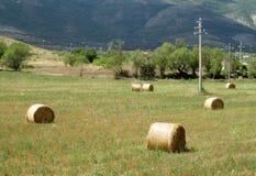 Rolls des Heus auf dem Feld Stockfotos