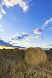 Rolls des Heus auf dem Gebiet bei Sonnenuntergang Stockfotografie