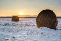 Rolls des Heus auf der Forderung durchgesetzt durch Schnee lizenzfreie stockfotografie