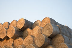 Rolls des meules de foin sur le champ Paysage de ferme d'été avec la meule de foin sur le Backgr Photographie stock