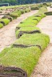 Rolls des neuen Rasens. Stockbilder