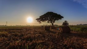 Rolls des Paddystrohs mit goldenem Sonnenunterganghintergrund bei Sungai Besar, Selangor, Malaysia stockfotos